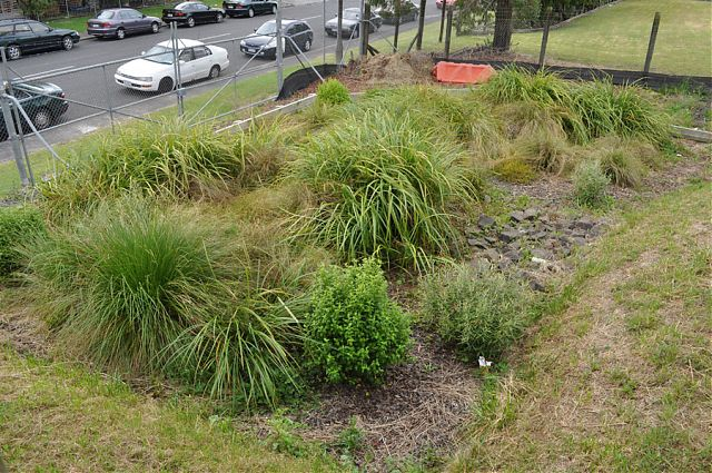Raingarden in commercial site West Auckland