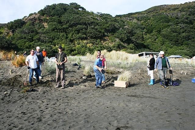 Tree planting at Piha Beach