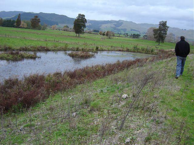 Waihu river